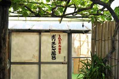 一年中、南国植物がお出迎え! トロピカル温泉 ポリネシヤ風呂。民宿「福屋」