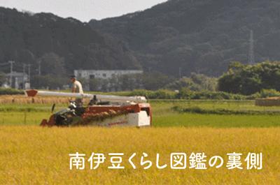南伊豆くらし図鑑の裏側|米農家とお米をつくる・考える〜中村大軌さん〜