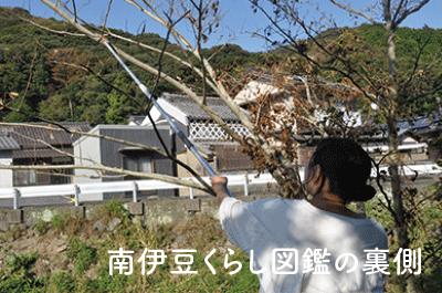 南伊豆くらし図鑑の裏側|山の木々からシャンプーづくり〜中野美代子さん〜