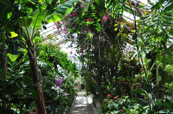 こちらが植物園(写真は一部)。現在は合計〇〇種類の熱帯植物が植えてある。11月から4月までは温泉熱のおかげで温暖な気候が維持される。常時●℃。