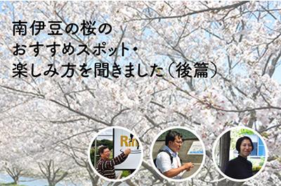 南伊豆町の800本桜レポート〜後編 〜3、4月のおすすめ桜スポットを南伊豆に住む人に聞いてみた〜